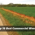 Best Commercial Weed Killer