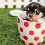 Grain-Free CBD-Infused Dog Treat Recipe