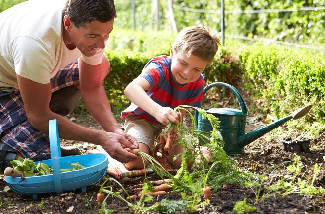 Economic Aspects of a Home Garden